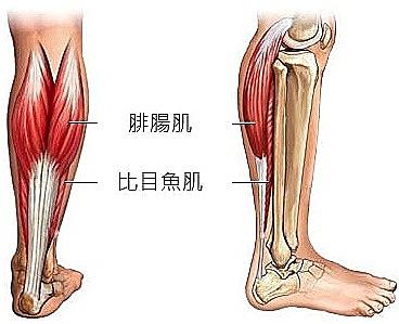 告別粗壯蘿蔔腿!先搞懂小腿肌,瘦小腿秘訣不藏私!