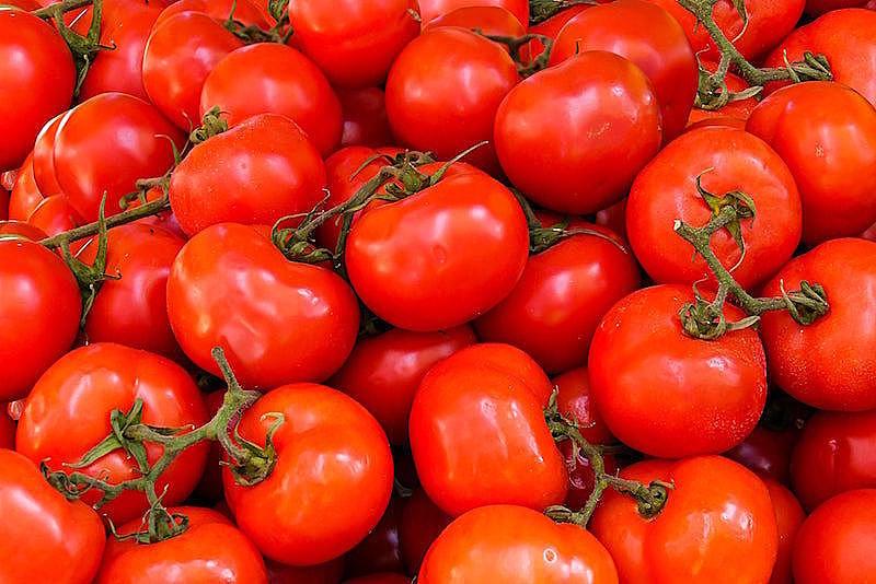 瘦得快又不復胖!醫生、營養師都推薦的「番茄減肥菜單」大公開