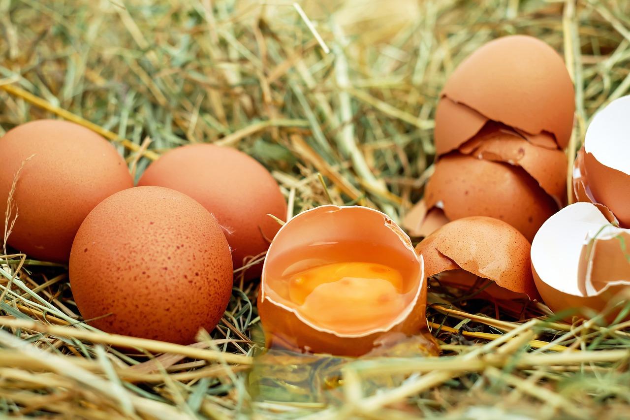 為什麼健身要補充高蛋白?營養師推薦高蛋白食物料理TIPS
